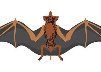 murcielagos animados 2
