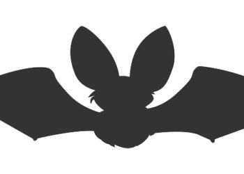 murcielagos animados 5